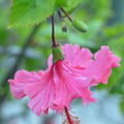 Dancing Lady Pink Hibiscus Art Print