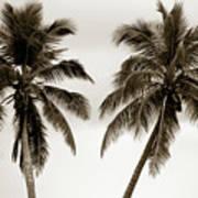 Dancing Palms Art Print