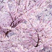 Dancing Sakura Haiku Art Print