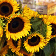 Dancing Sunflowers Art Print