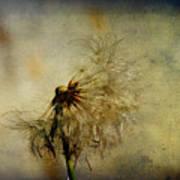 Dandelion Flower Art Print