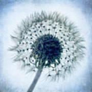 Dandelion In Blue Art Print