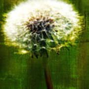 Dandelion In Green Art Print