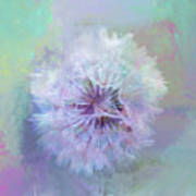 Dandelion In Pastel Art Print