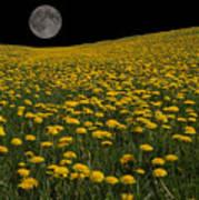 Dandelion Moon Art Print