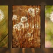 Dandelion Series Art Print