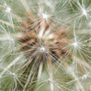 Dandelion Sparkles Art Print