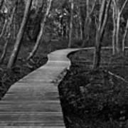 Daniel Webster Boardwalk IIi Art Print