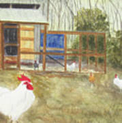 Dan's Chickens Art Print