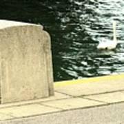 Danube River Swan Art Print