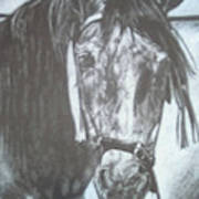Dapple Andalusian Art Print