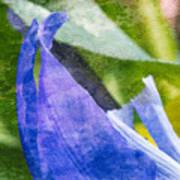 Dappled Petals Art Print