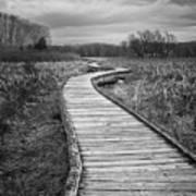 Dark Appalachian Trail Art Print