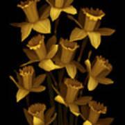 Dark Daffodils Art Print
