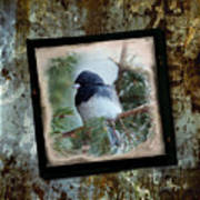 Dark-eyed Junco Art Print