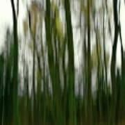 Dark Forest 3 Art Print