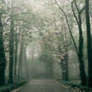 Dark Gloomy Alley In Woods Art Print