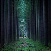 Dark Side Of Forest Art Print