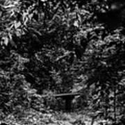 Dark Summer Woods Art Print