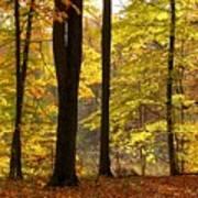Dark Trunks Bright Leaves Art Print