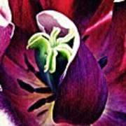 Dark Tulip Macro Art Print