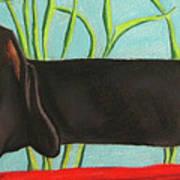 Dash Hound Art Print