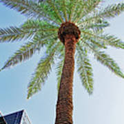 Date Palm In The City Art Print