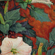 Datura Flower Art Print