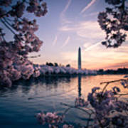 Dawn Blossoms Art Print