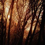 Dawn In The Trees Art Print