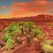 Dawn Light Capitol Reef National Park Utah  Art Print