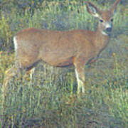 Dawn Names The Deer Art Print