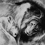 Dawn's A Coming Open Your Eyes - Lions Art Print