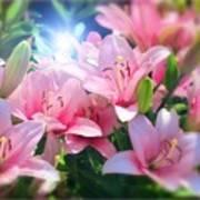Day Light Lilies Art Print