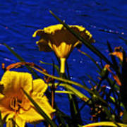 Day Lilies By The Water Art Print