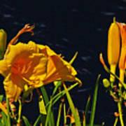 Day Lilies, Dark, Background Art Print