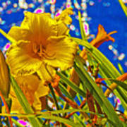Day Lilies In The Sky With Diamonds  Art Print