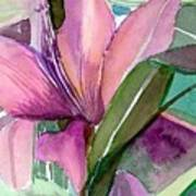Day Lily Pink Art Print