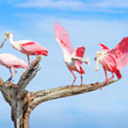 Day Of The Spoonbill  Art Print