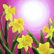 Daybreak Daffodils Art Print