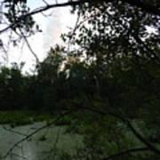 Daylight In The Swamp Art Print