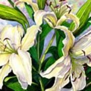Daylilies 2 Art Print