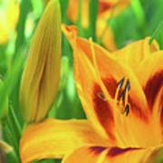 Daylily Bud And Bloom Art Print