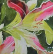 Daylily Study 1 Art Print