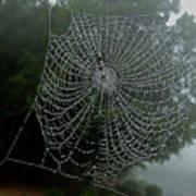 Db6325-dc Spiderweb On Sonoma Mountain Art Print