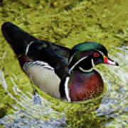Dc Duck Art Print