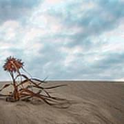 Dead Bush In Sea Sand St Lucia Art Print