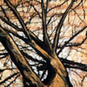 Dead Elm Art Print