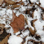 Dead Leaves In The Snow Art Print
