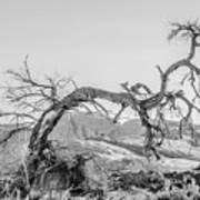 Dead Old Tree Near Monument Valley Arizona Art Print